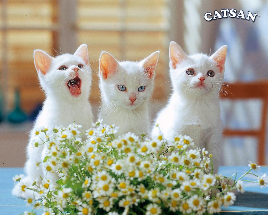 Котик с цветами картинки 1
